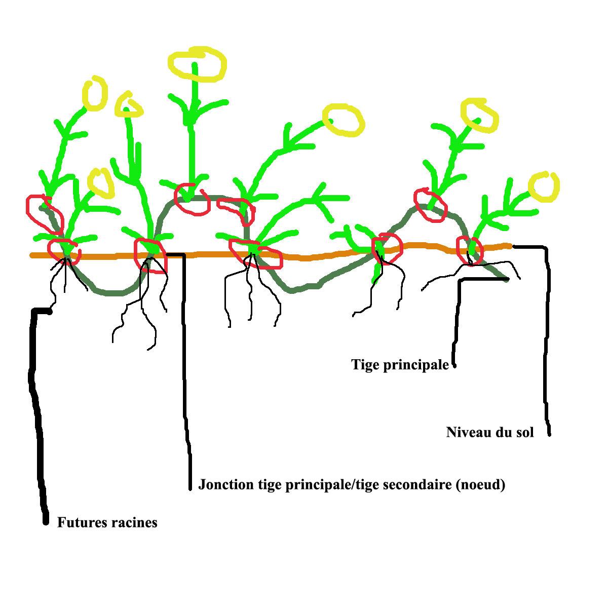 Plantation et culture des plantes grasses - Quelles sont les plantes que l on peut bouturer ...