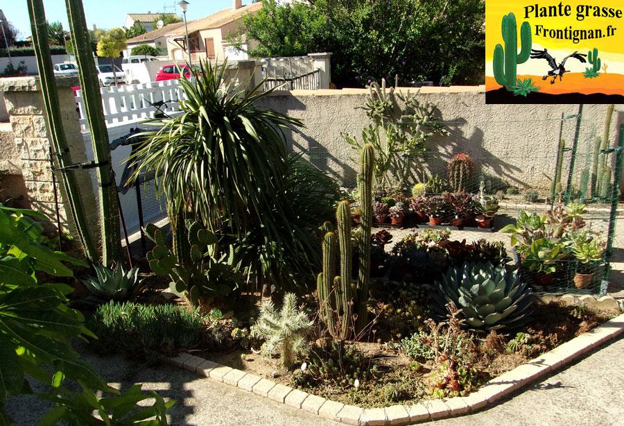 plantes grasses mediterraneennes. Black Bedroom Furniture Sets. Home Design Ideas