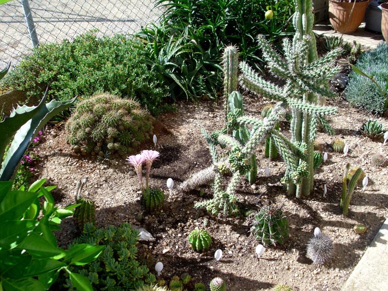creation jardin mediterraneen. Black Bedroom Furniture Sets. Home Design Ideas