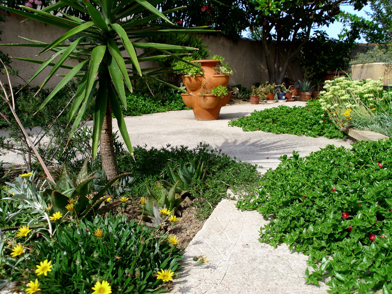 Creation jardin mediterraneen
