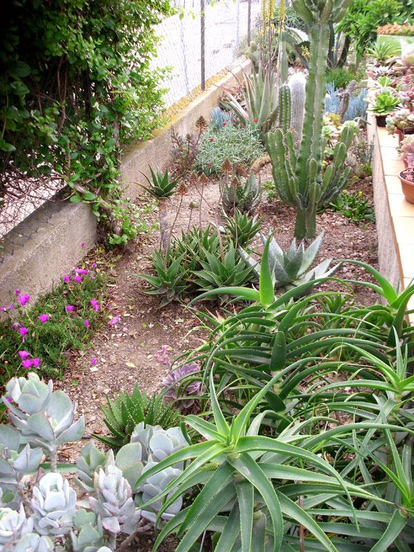 Jardin mediterraneen for Entretien jardin frontignan